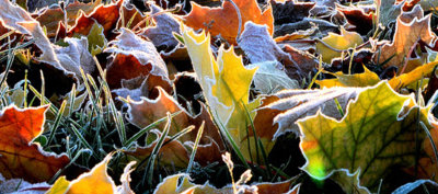 Autumn and Winter gardening in East Sussex and Kent