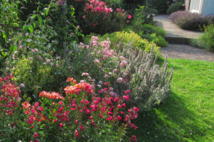 Professional gardeners in West Kent